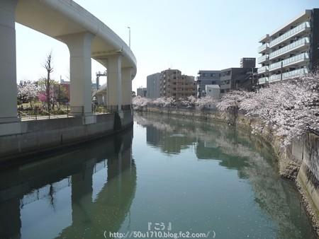 150402-桜 大岡川 (14)