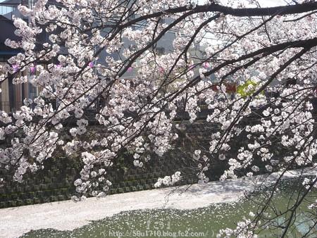 150402-桜 大岡川 (59)