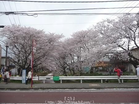 150403-桜 大和千本桜 (62)改