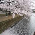 Photos: 150403-桜 大和千本桜 (75)