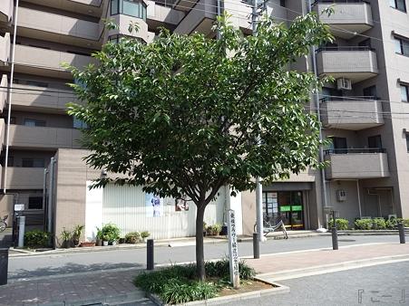 110622-東横廃線 東白楽→反町 (26)