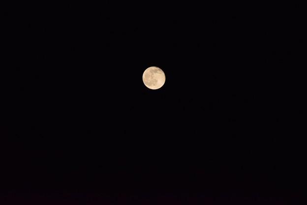 Photos: 2015年春 とある日の望月