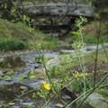 三渓園の小川2