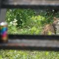 Photos: 階段裏のノラ猫