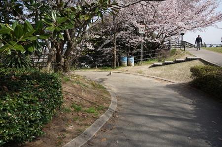 2015年3月30日 西公園 桜 福岡 さくら 写真 (37)