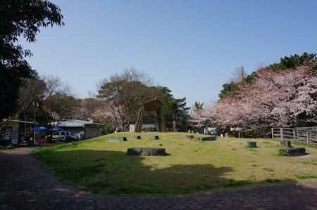 2015年3月30日 西公園 桜 福岡 さくら 写真 (66)