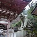 仁王門の狛犬(虎)