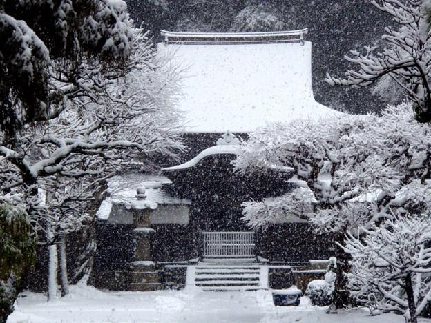 Photos: 円覚寺正続院3-20120229