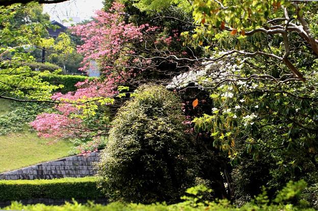 花水木の白と赤の風景