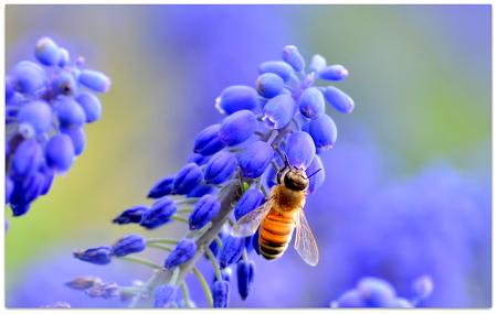 Honey Hunter Evolution
