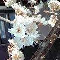 Photos: 春の便り。