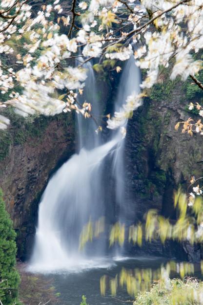 Photos: 桜と滝をスローで