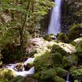 Photos: 寄姫の滝