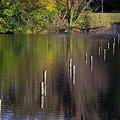 秋色の水鏡2