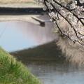 Photos: 春を過ごす