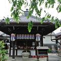 Photos: 地蔵院(椿寺) (3)