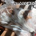 Photos: 寒い!