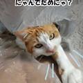 Photos: 窒息の危険あり!