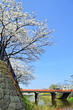 150412桜12