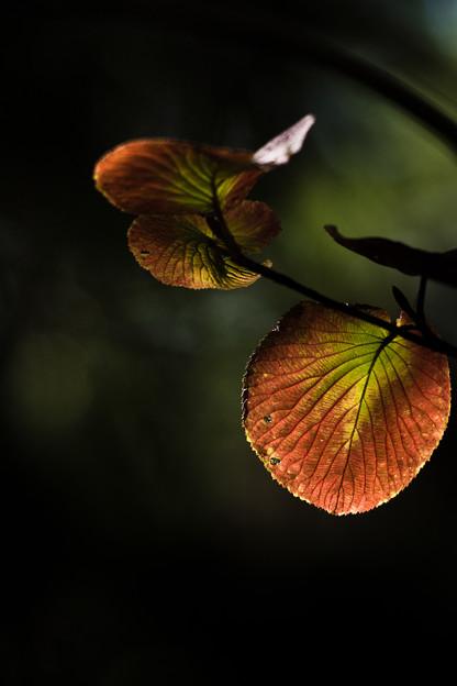 木漏れ日の秋色
