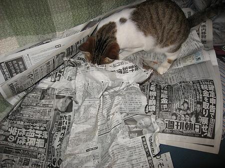 カポ(猫♀)が朝からイライラなのです!