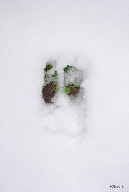 写真: 足跡