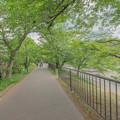 写真: #3 芥川桜堤公園