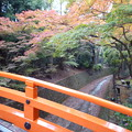 写真: 錦秋の紙屋川 Kamiya River,Kitano Tenmangū