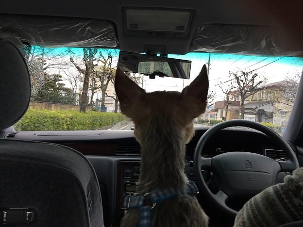 安全運転だよ!