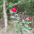 Photos: 画像ー8 184