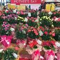 Photos: 母の日