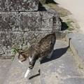 写真: 猫足