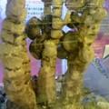 写真: オカヤドカリの木登りです。