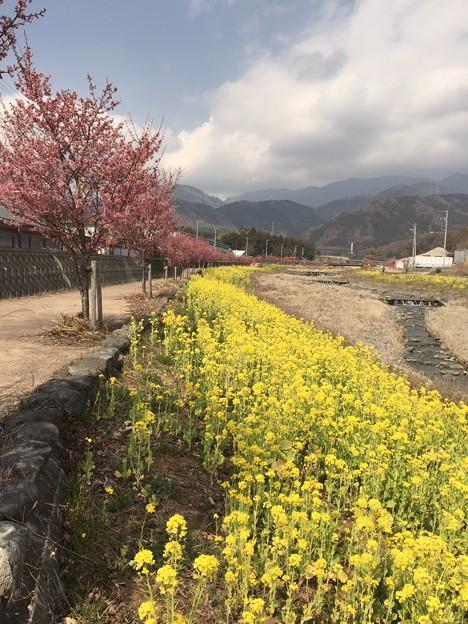 Photos: 2015/03/15・・・春の足音No04