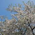 Photos: 2015/03/22・・・春の息吹?02