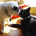 写真: 逃げたマカロン黒猫に遭遇