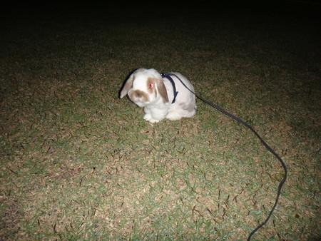 てん 夜散歩 (1)