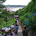 写真: 2012.06.06 鎌倉 成就院