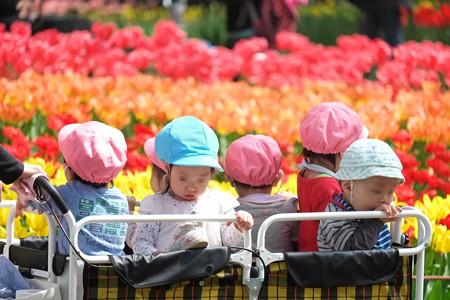 2015.04.06 横浜公園 チューリップ散歩