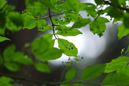 2015.04.20 追分市民の森 コマユミ