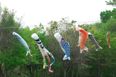 2015.04.21 和泉川 鯉幟