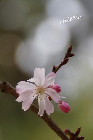 北鎌倉-391