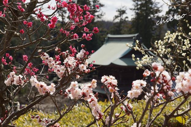 北鎌倉-434