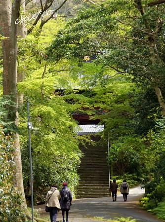 鎌倉-174