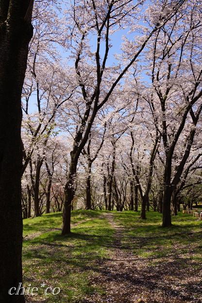 根岸森林公園-201