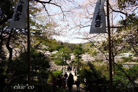 三渓園~桜咲くころ~-241