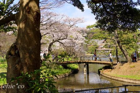 三渓園~桜咲くころ~-246