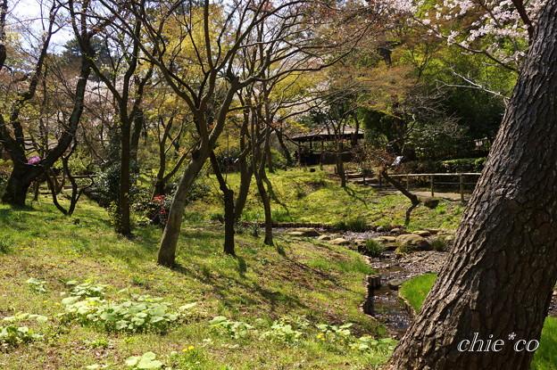 三渓園~桜咲くころ~-257