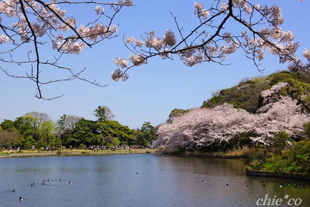 三渓園~桜咲くころ~-258