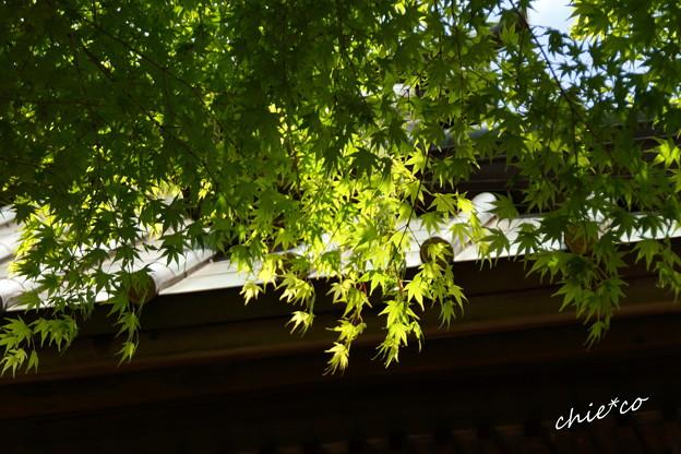 鎌倉 英勝寺-295